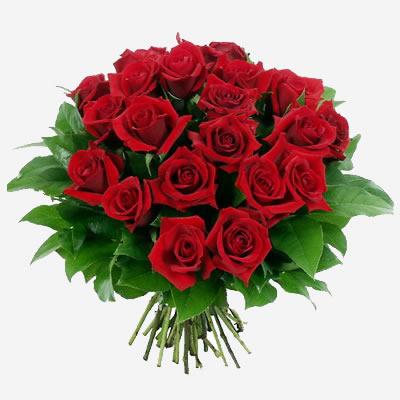 grazie dei fiori - Grazie dei fiori