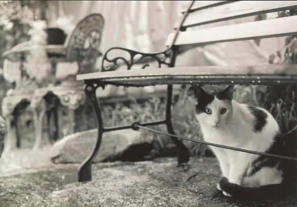 i gatti - I gatti