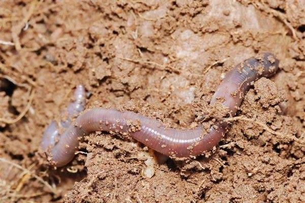 paura dei vermi - Paura dei vermi